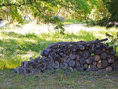 The Old Wood Pile by Tommi Trudeau