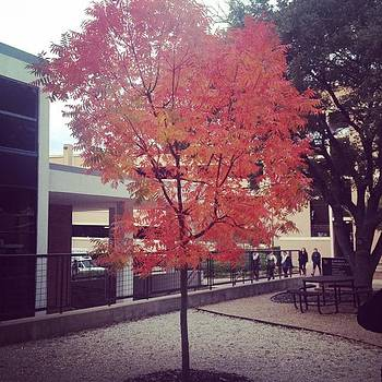 The Only Tree At #shsu That Really by Sarah Verdejo