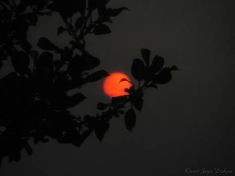 Joyce Dickens - The Orange Sun Sets