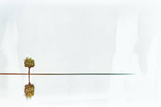 The Orange Tree by Rabiri Us