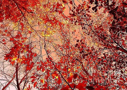 Jenny Revitz Soper - Orange Colored Sky