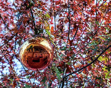 Daryl Clark - The Ornament