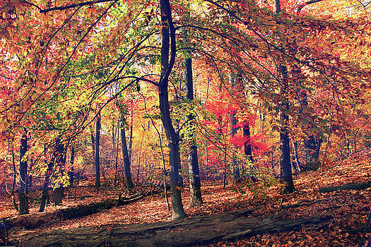 The Painted Forest by Jessica Jenney