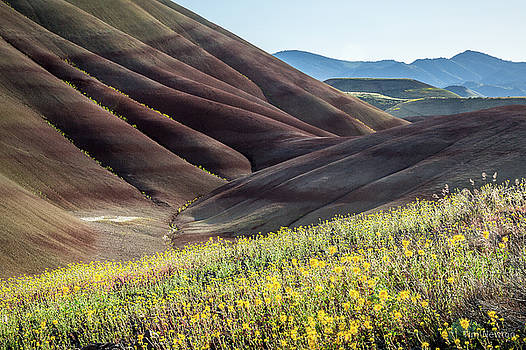 The Painted Hills in Bloom by Tim Newton