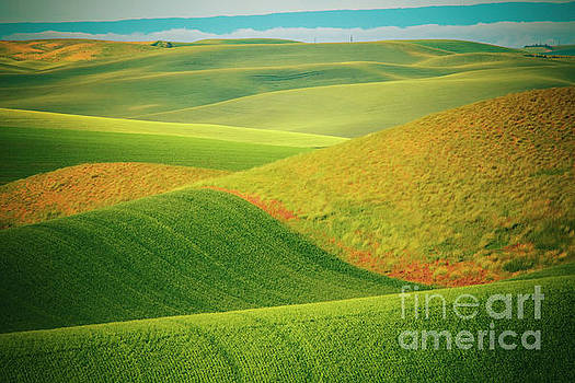 The Palouse by Katya Horner