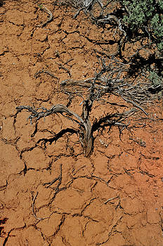 The Parched Earth by Ron Cline
