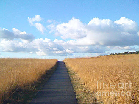 The path by Beryllium Photography