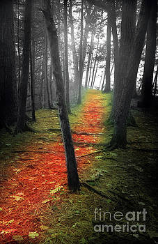 The Path  by Deena Athans