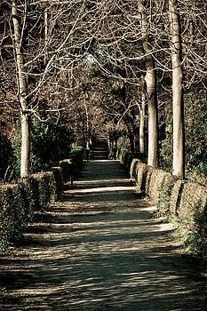 The Path by Felix M Cobos
