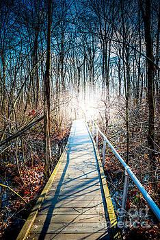 The Path Home by Jim DeLillo