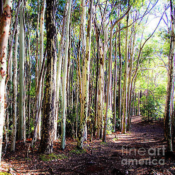 The Pathway 409 S - Aiea Loop Trail by D Davila