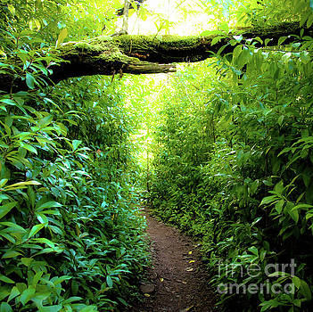 The Pathway 564 S - Aiea Loop Trail by D Davila