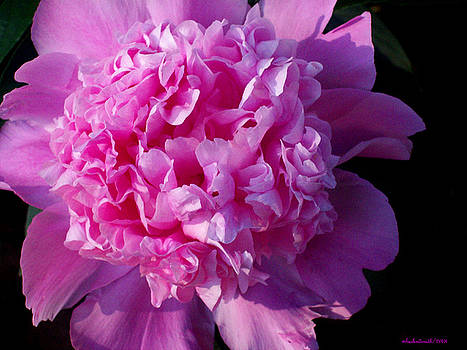 Michelle  BarlondSmith - The Peony