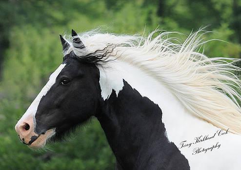 Terry Kirkland Cook - The Perfect Stallion