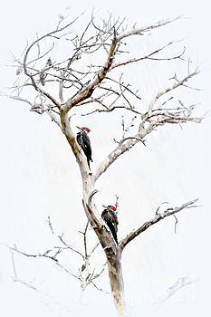 The Pileated Pair by Benanne Stiens