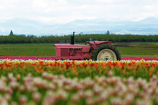The Pink Tractor by David Gn