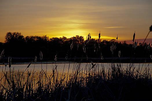 The Poetic Marsh by Leo Bello
