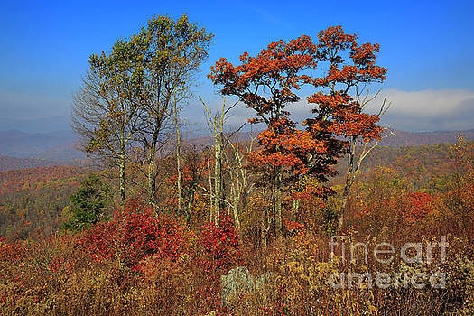 The Point Overlook Skyline Drive Shenandoah National Park by Louise Heusinkveld
