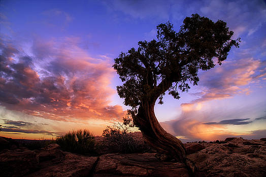The Point, Utah by Vincent James