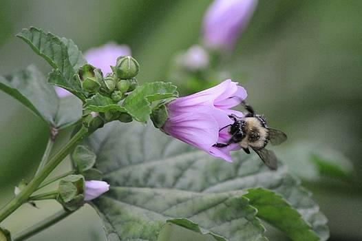 The Pollenator by Jennifer Englehardt