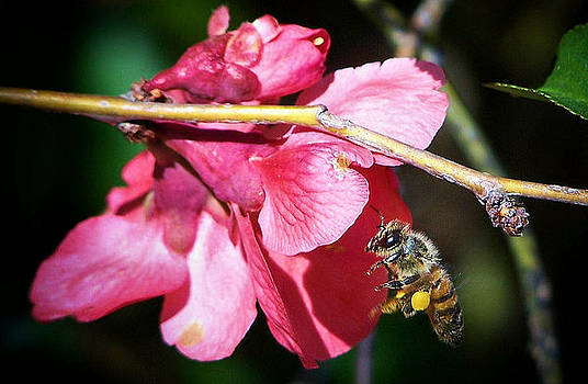 Karen Scovill - The Pollinator