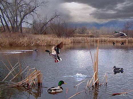 The Pond by Bill Stephens