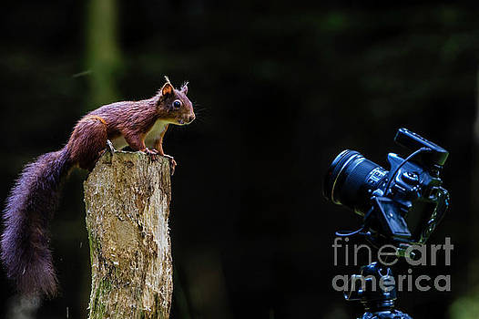 The Poser by Andy Beattie Photography