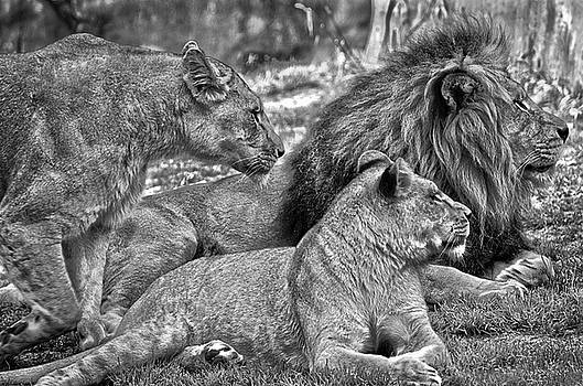 The Pride by Spade Photo