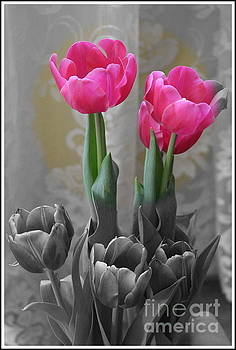 The Promise of Spring - Pink Tulips on Black and White by Dora Sofia Caputo Photographic Design and Fine Art