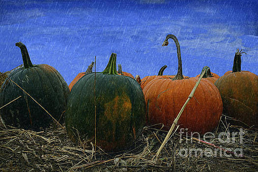 The Pumpkin Patch  by L Wright