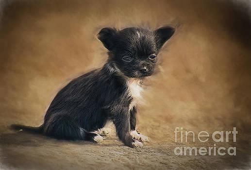 The Puppy by Billie-Jo Miller