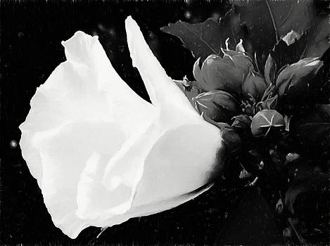The Purity Of Nature by Debra Lynch