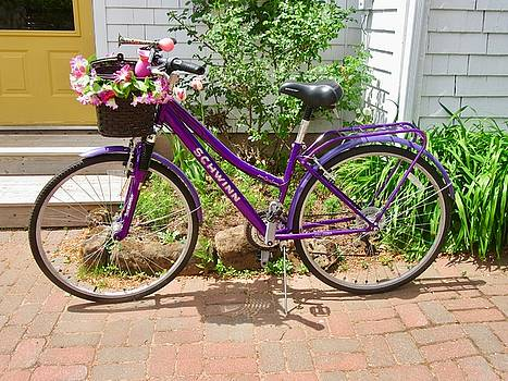 Stephanie Moore - The Purple Bike