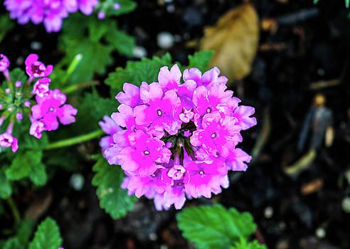 The Purple Flower by Britten Adams