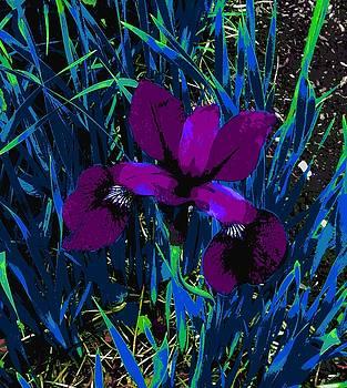 The purple flower  by ONDRIA-UNIqU3-Pics- Admin
