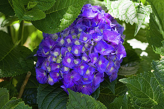 The Purple of All Purples by Kathy Clark