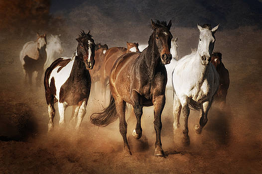 The Race by Heather Swan