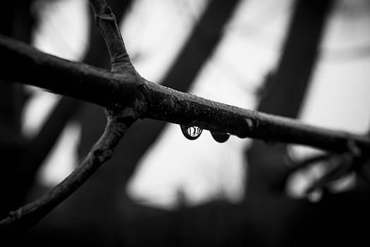 Stewart Scott - The rain stopped