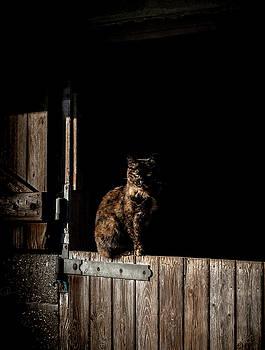 The Rat Catcher by Paul Neville