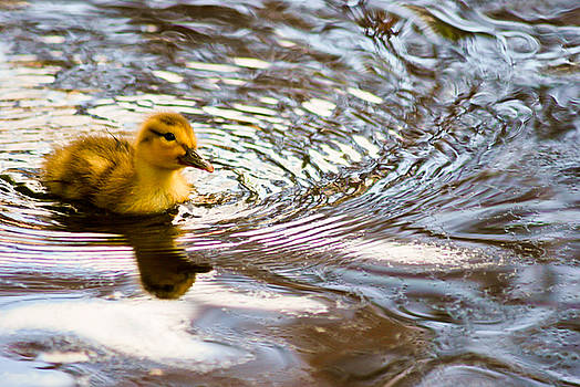 The REAL Rubber Ducky by Kimberly Deverell