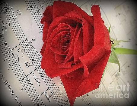 The Red Rose of February by Dora Sofia Caputo Photographic Design and Fine Art