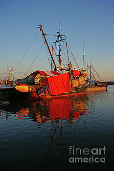 The Red Tarps on the Docks by Randy Harris