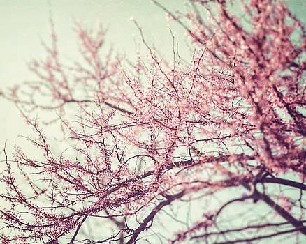 Lisa Russo - The Redbud Tree