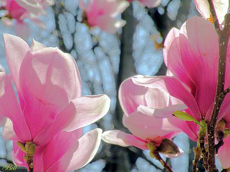 The Return of Spring by Christine Belt