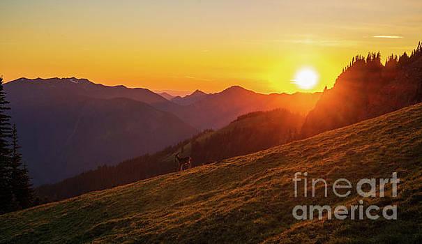 The Ridge and the Deer by Mike Reid
