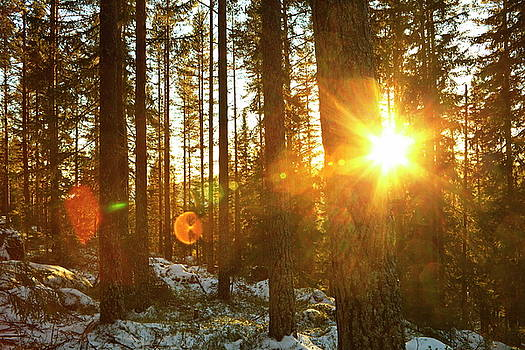 The rising sun illuminates a wintry forest by Ulrich Kunst And Bettina Scheidulin