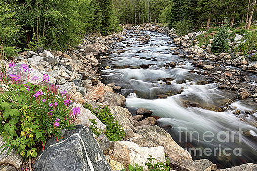 The River and Wildflowers by Tibor Vari