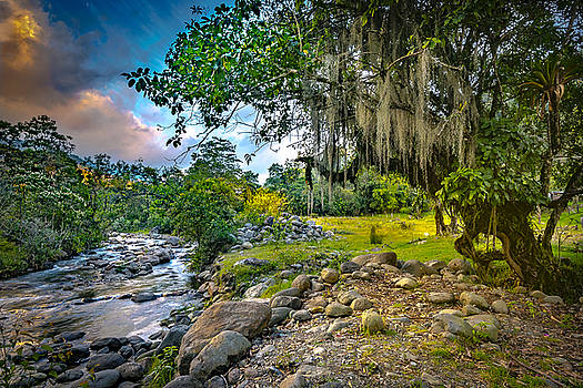 Francisco Gomez - The River At Cocora