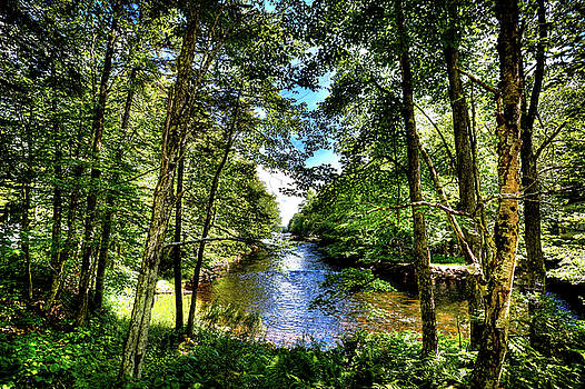 The River at Covewood by David Patterson