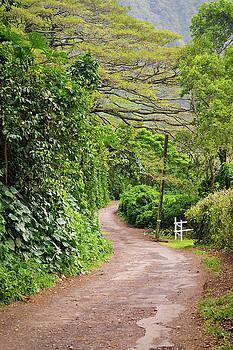 The Road Less Traveled-Waipio Valley Hawaii by Denise Bird